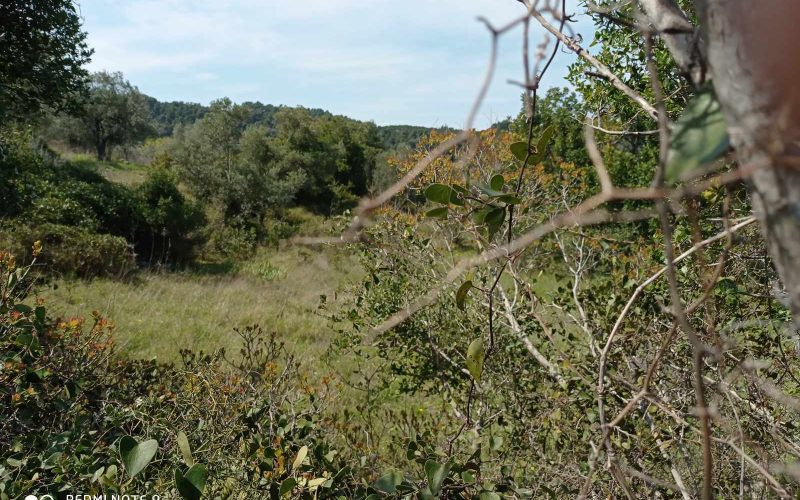 Big land with cottages to renovate close to Panormos beach Land
