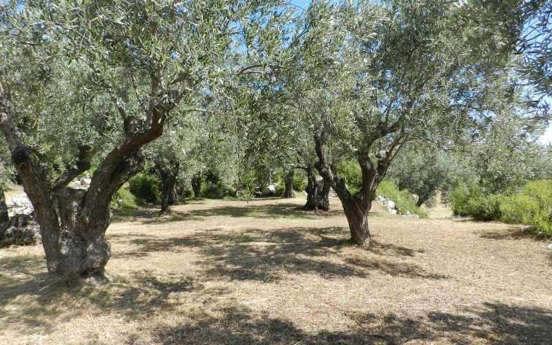 Architect designed Villa in the countryside of Skopelos Island Olive grove