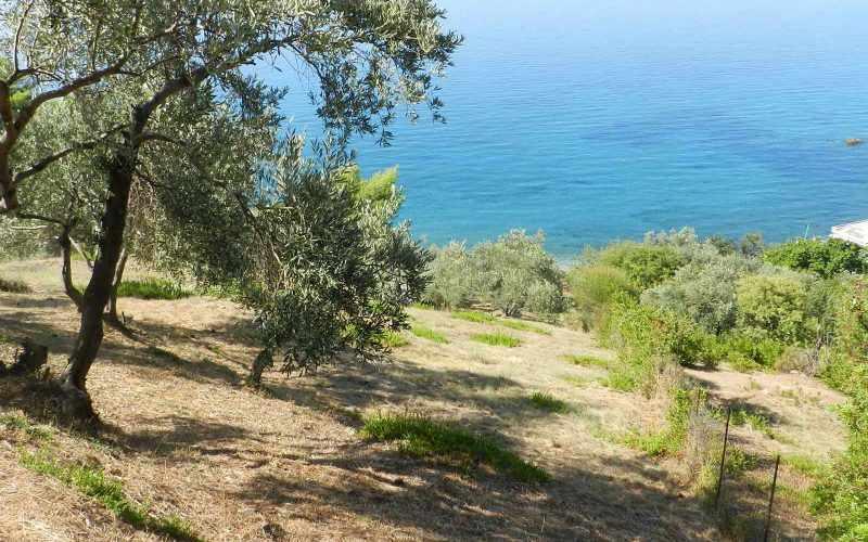 Unique plot with access to private beach Olive grove