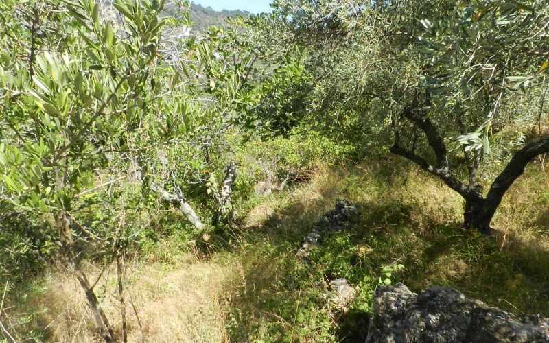Plot near Glossa rea with views to the Sea Vegetation