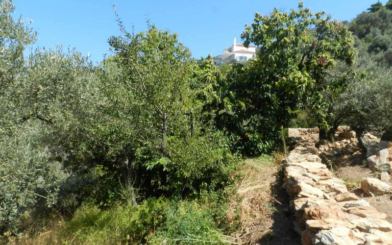 Plot near Glossa rea with views to the Sea Teerraces