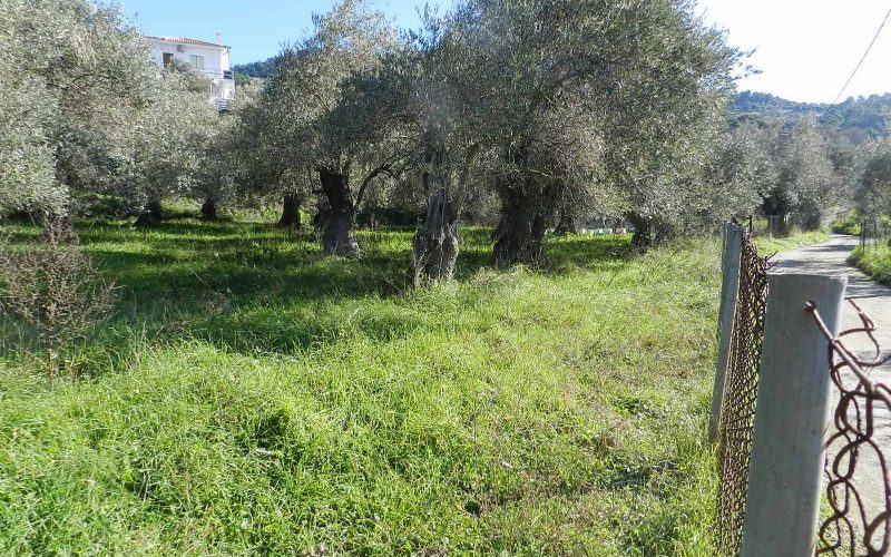 Land close to Skopelos waterfront with buildng permit Vegetation