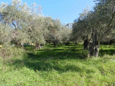Land close to Skopelos waterfront with buildng permit