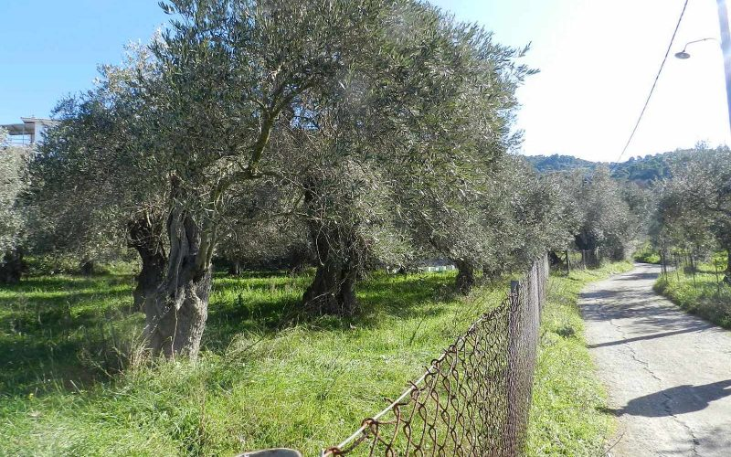 Land close to Skopelos waterfront with buildng permit Road