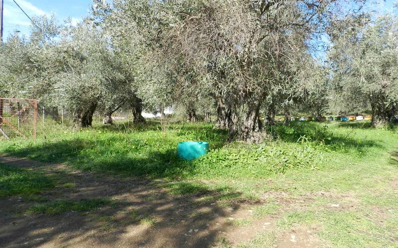 Land close to Skopelos waterfront with buildng permit Land 4