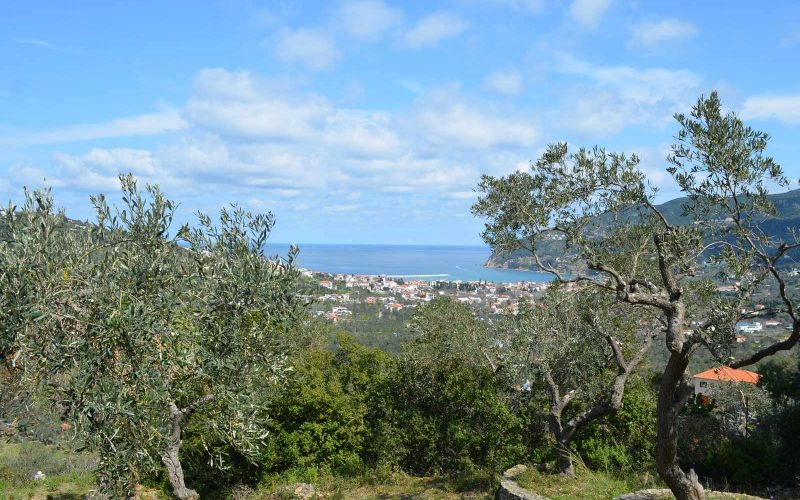 Villa with guest house close to Skopelos Town Olive grove