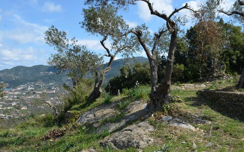 Villa with guest house close to Skopelos Town Olive trees