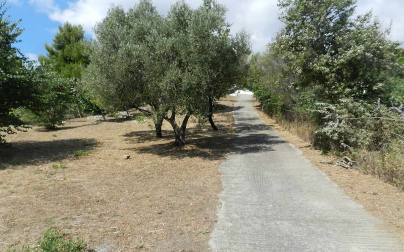 Villa with swimming pool and stunning views to the Sporades Islands Orchard