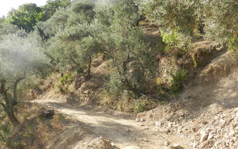 Land property above Skopelos Town with breathtaking views Road of the plot