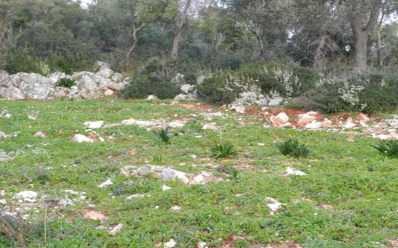 Unique Land with amazing views to Stafilos beach Olives