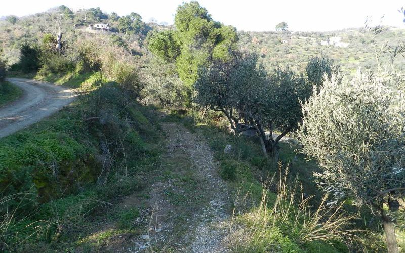Beautiful Land above Skopelos Town with views and building permit Acces