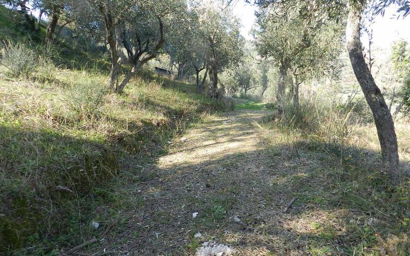 Beautiful Land above Skopelos Town with views and building permit Road of the plot