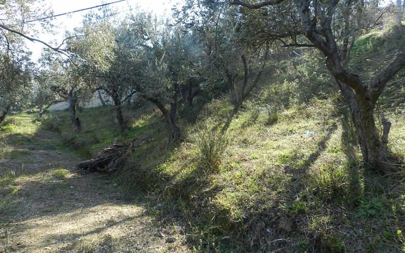 Beautiful Land above Skopelos Town with views and building permit Plot