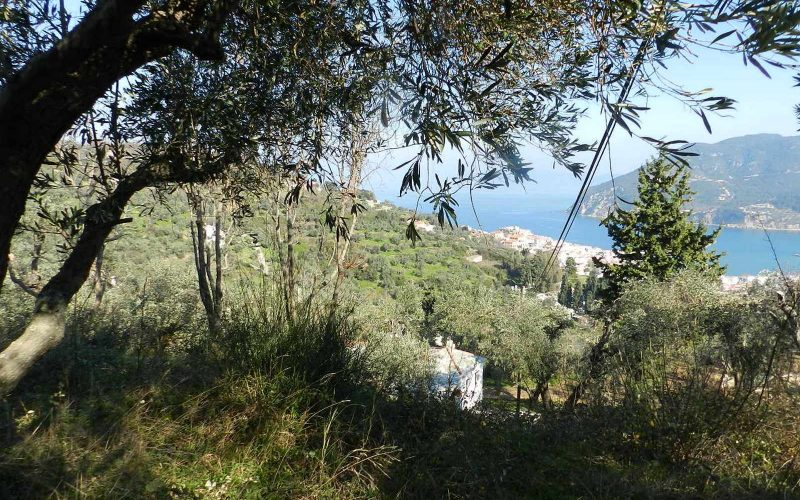 Beautiful Land above Skopelos Town with views and building permit Vegetation
