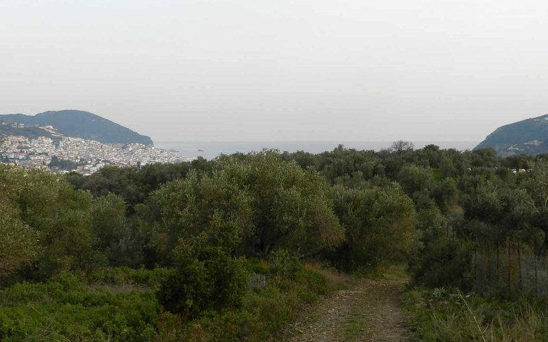 Spacious olive grove close to Skopelos town with views Acces