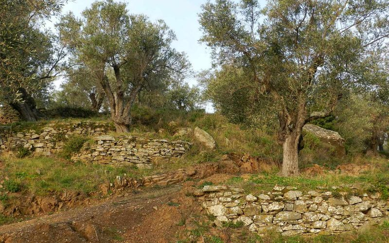 Spacious olive grove close to Skopelos town with views Stone walls