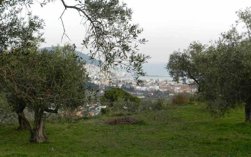Spacious olive grove close to Skopelos town with views Views