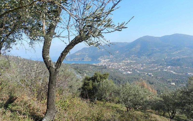 Buildable plot in the area of Pefkias with views