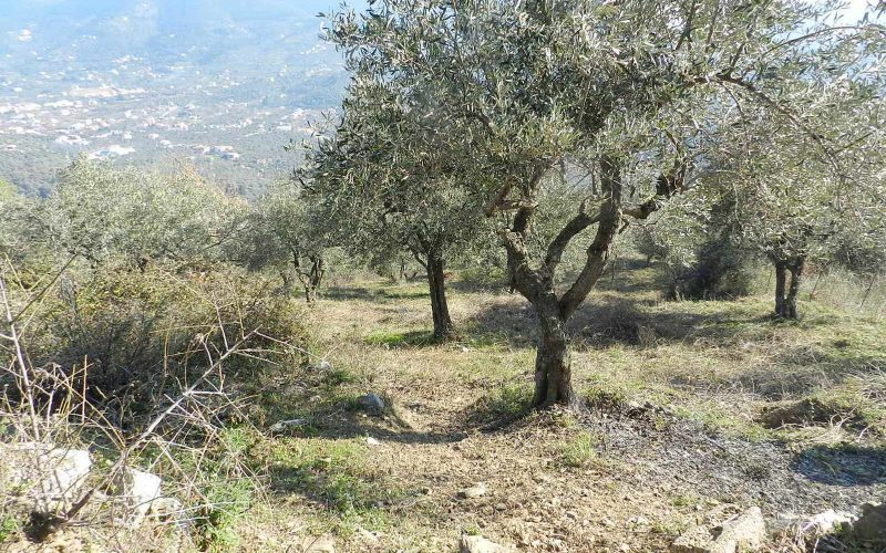 Buildable plot in the area of Pefkias with views Plot 2