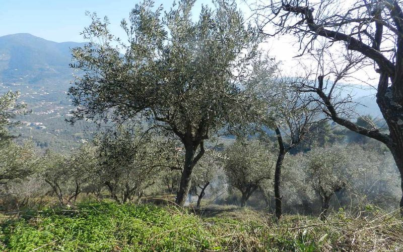 Buildable plot in the area of Pefkias with views Vegetation