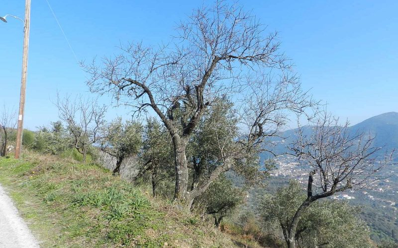 Buildable plot in the area of Pefkias with views Plot