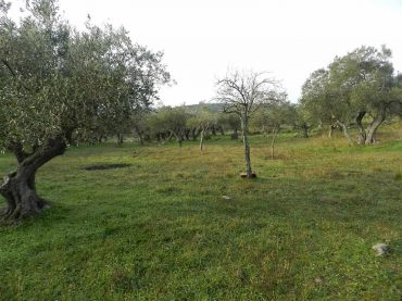 Spacious plot in the area of Alikias