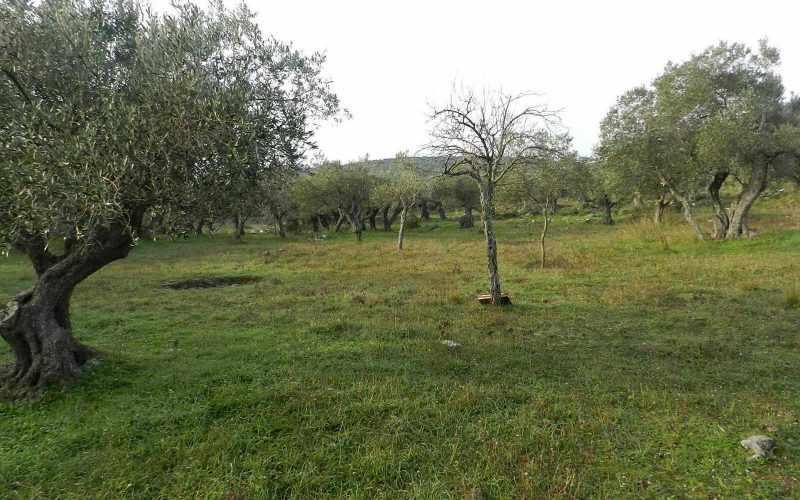 Spacious plot in the area of Alikias