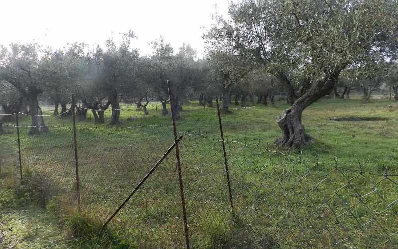 Spacious plot in the area of Alikias Plot