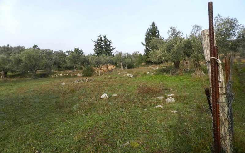 Spacious plot in the area of Alikias Ground