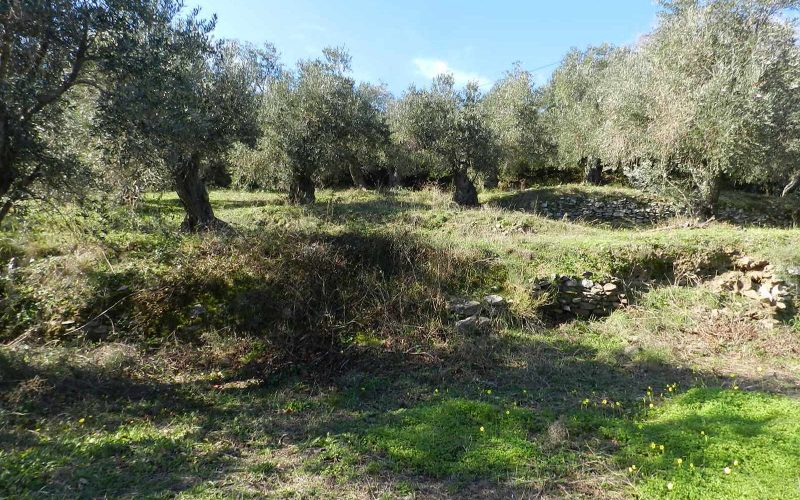 Unique plot in Agios Konstantinos with spactacular views Olive grove