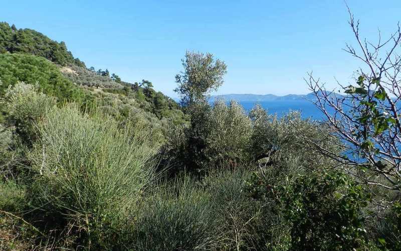Unique plot in Agios Konstantinos with spactacular views Vegetation 2