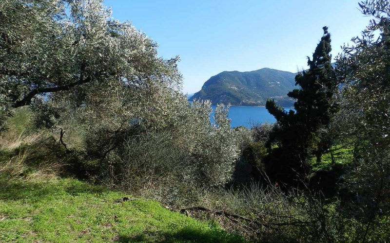 Unique plot in Agios Konstantinos with spactacular views Vegetation